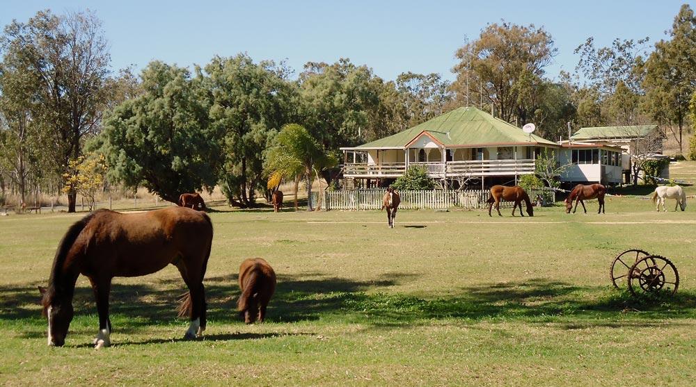Pferde vor dem Wohnhaus der Trainingsfarm