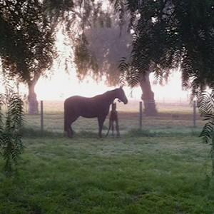 Pferd mit Fohlen auf der Weide