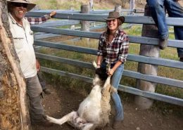 Schafringkampf auf der Trainingsfarm