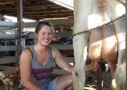 Beim Kuh melken